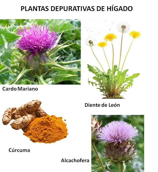 PLANTAS DEPURATIVAS DE HÍGADO